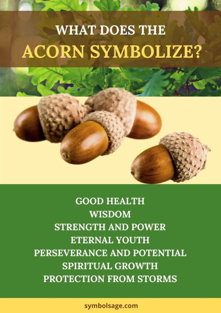 Acorn meaning symbolism