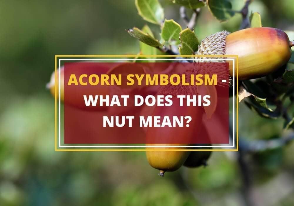 Acorn symbolism