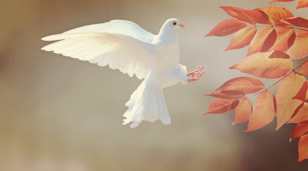 dove flying as peace symbol