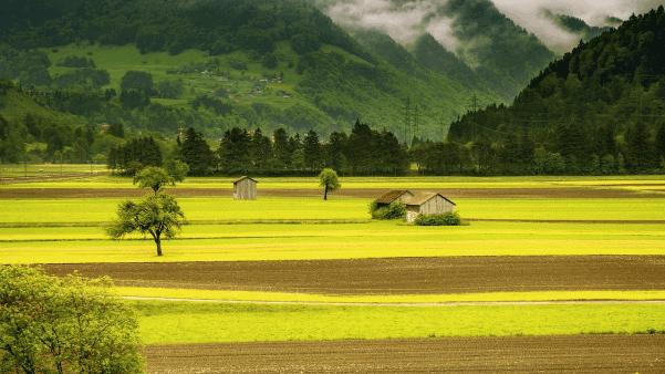 Green fields nature