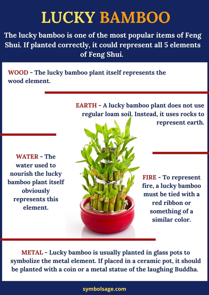 lucky bamboo meaning
