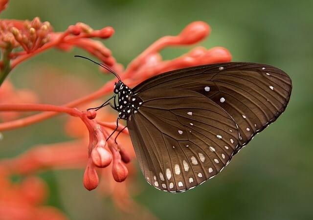 Butterfly symbol of rebirth