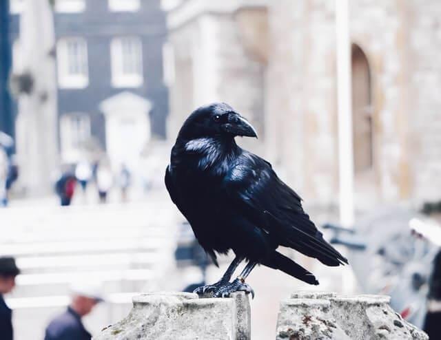 Crow death symbol