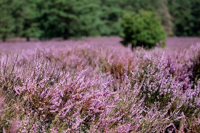 heather Scotland