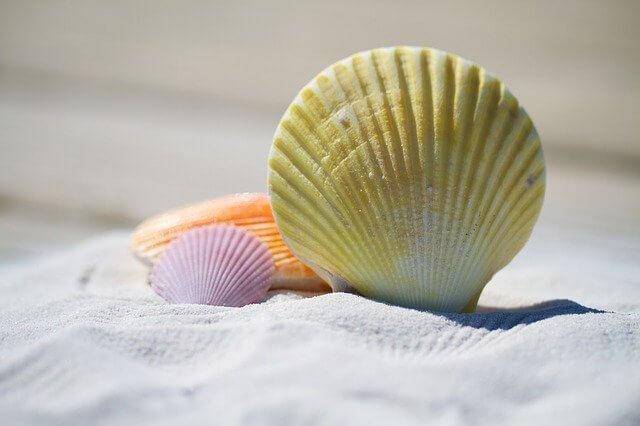 Shell love symbol