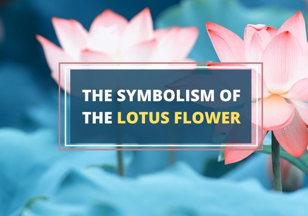 Symbolism of lotus