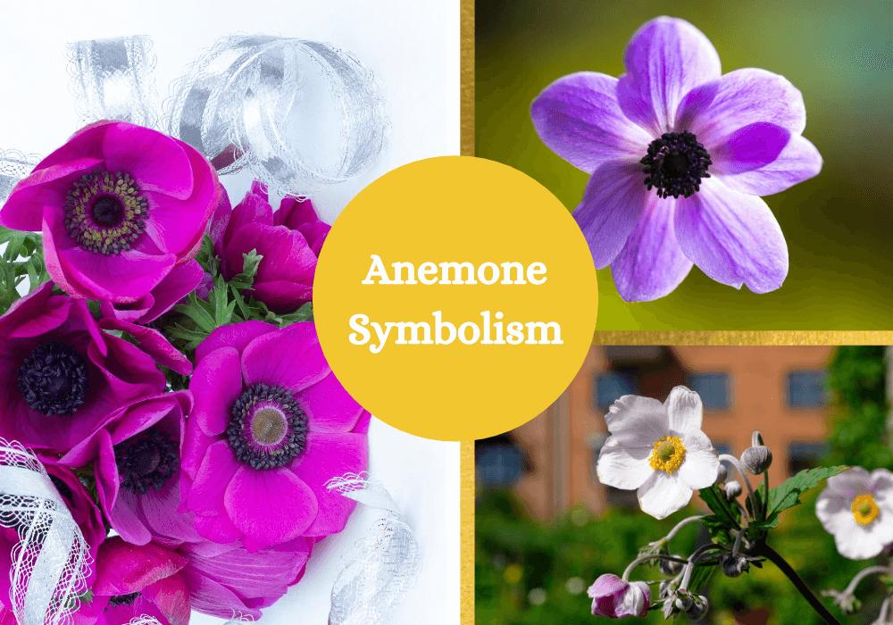 Anemone symbolism meaning