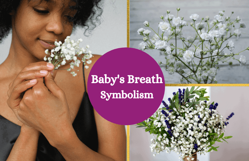 Babys breath symbolism and meaning