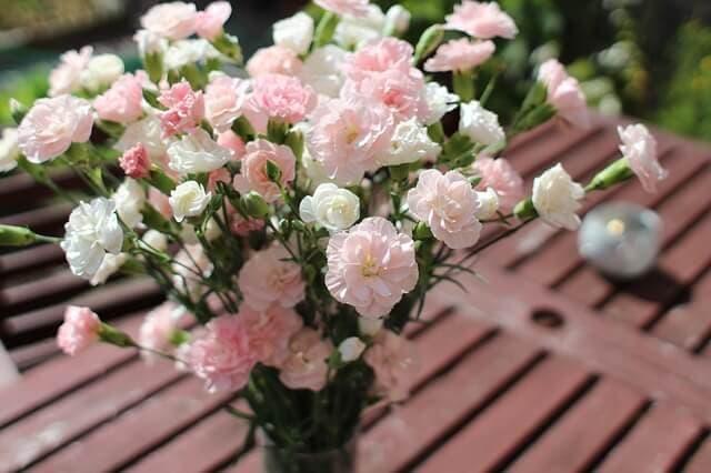 Carnation symbolism