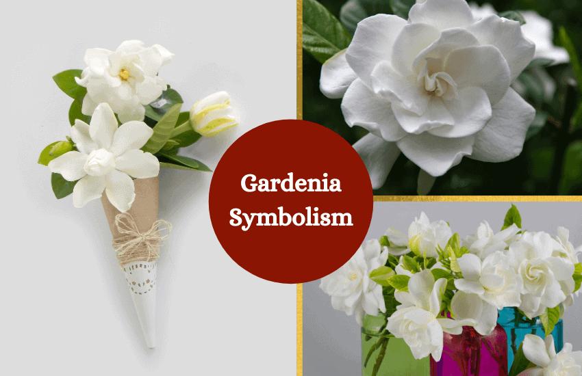 Gardenia symbolism