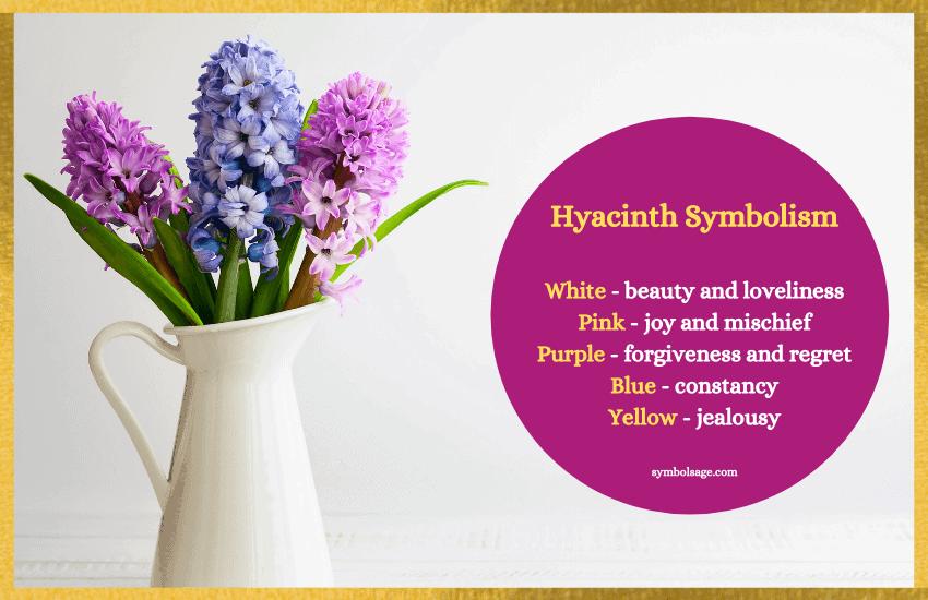 Hyacinth color symbols