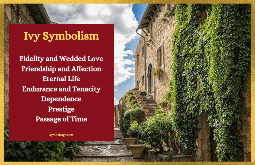 Ivy meaning symbolism