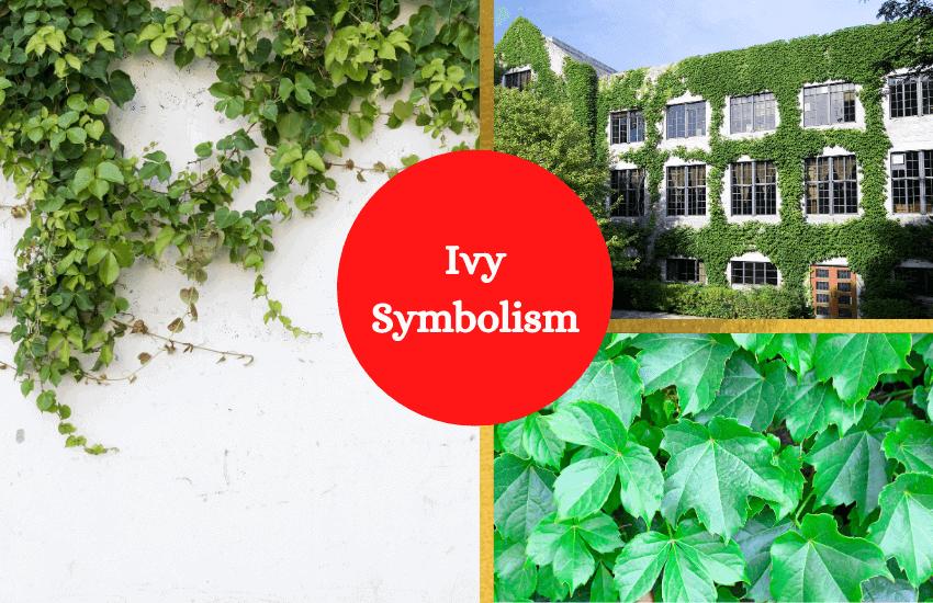 Ivy symbolism