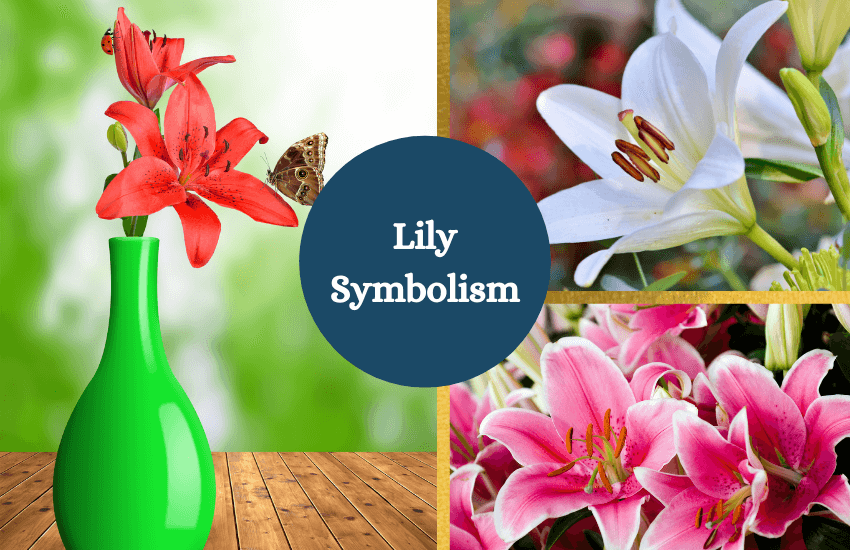 Lily meaning symbolism