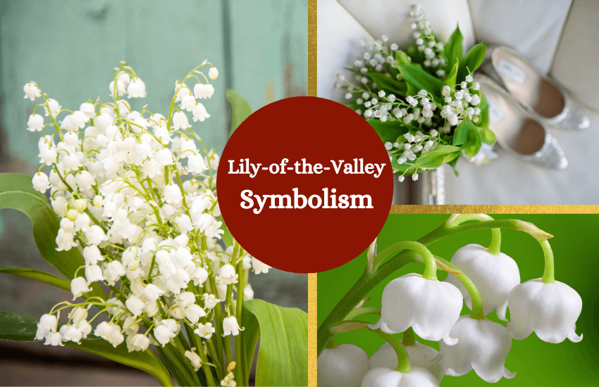 Lily of the valley symbolism