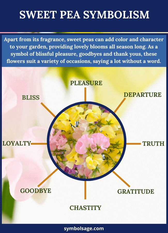 Sweet peas Meaning and symbolism