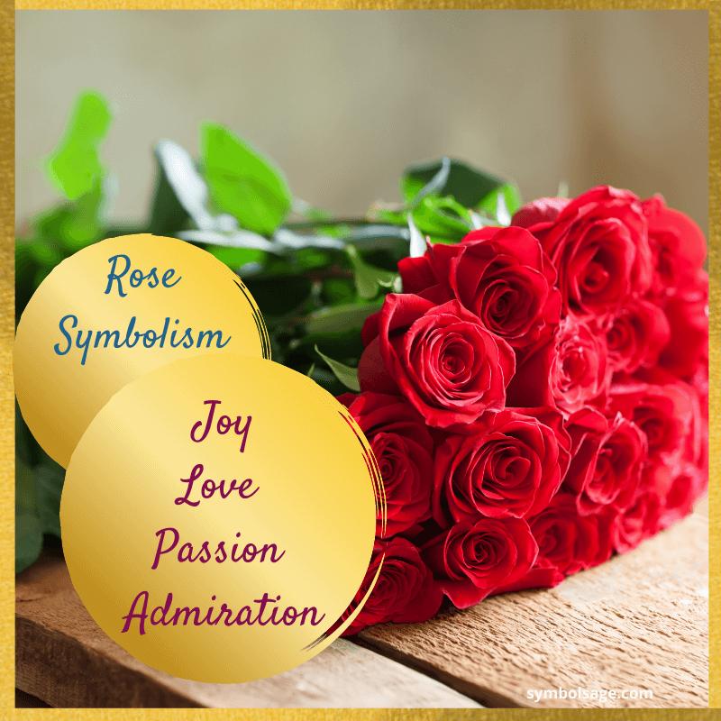 Rose flower symbolism explained