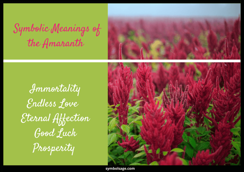 amaranth symbolic meaning