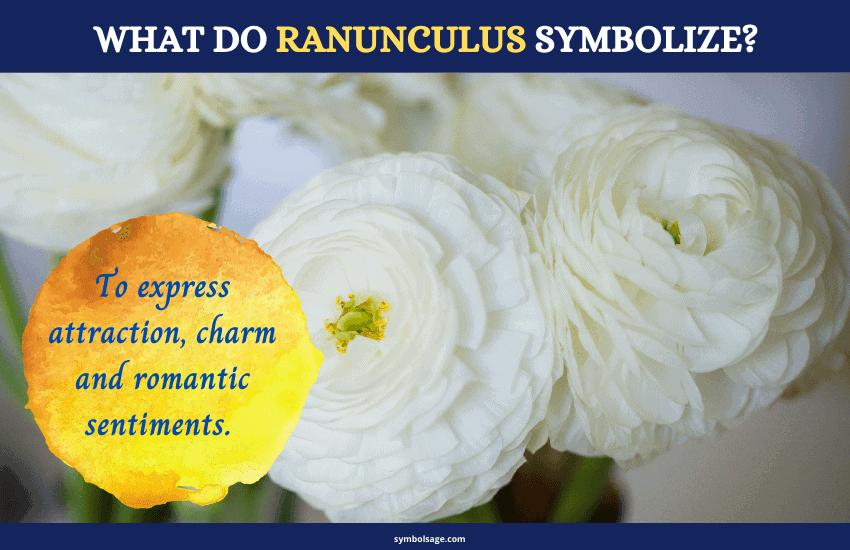 Symbolism of ranunculus