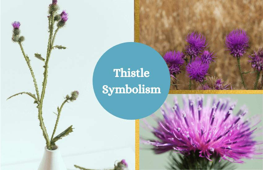 Thistle flower symbolism