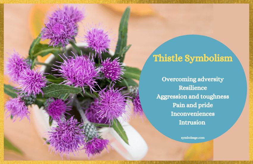 Thistle symbolism