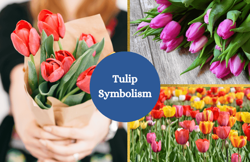 Tulip symbolism and meaning