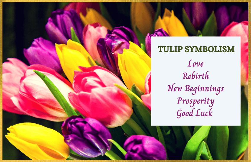 Tulip symbolism