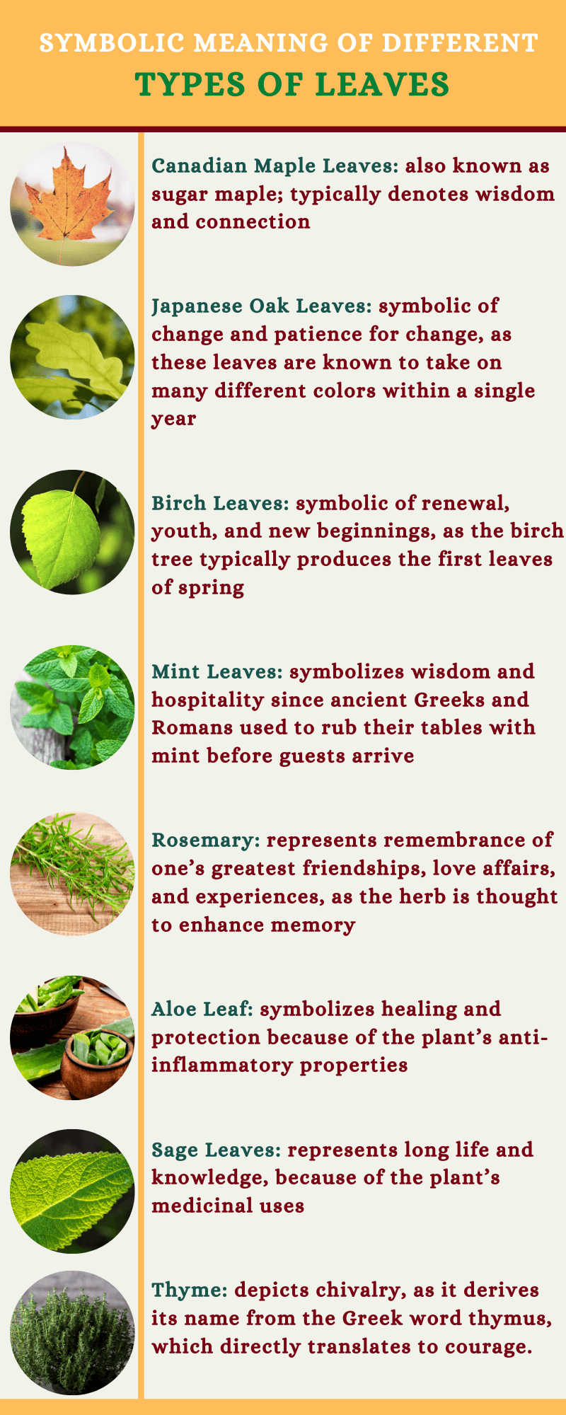 Types of leaves meaning