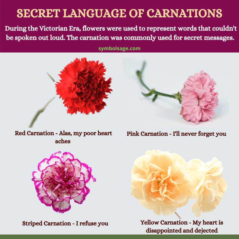 Carnation meaning