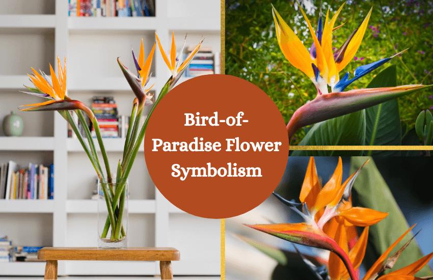 Bird of paradise flower symbolism