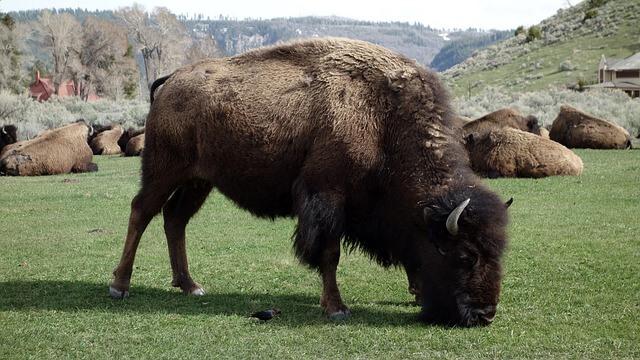 Buffalo Wyoming state