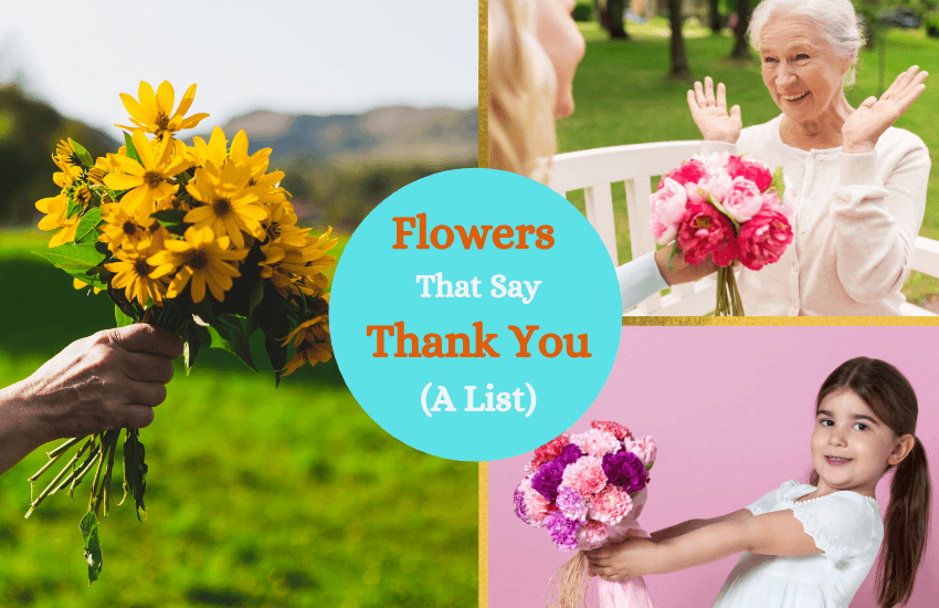 Flowers that say thank you