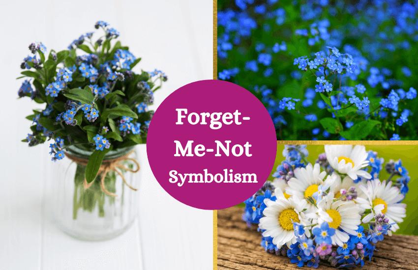 Forget me not symbolism