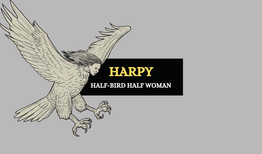 Harpy Greek mythology