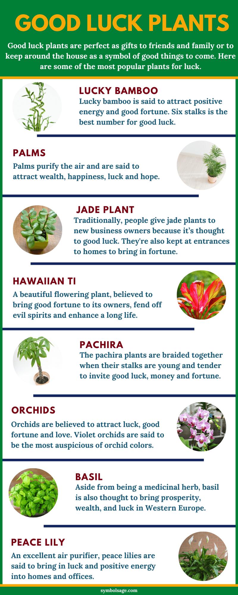 Good luck plants list