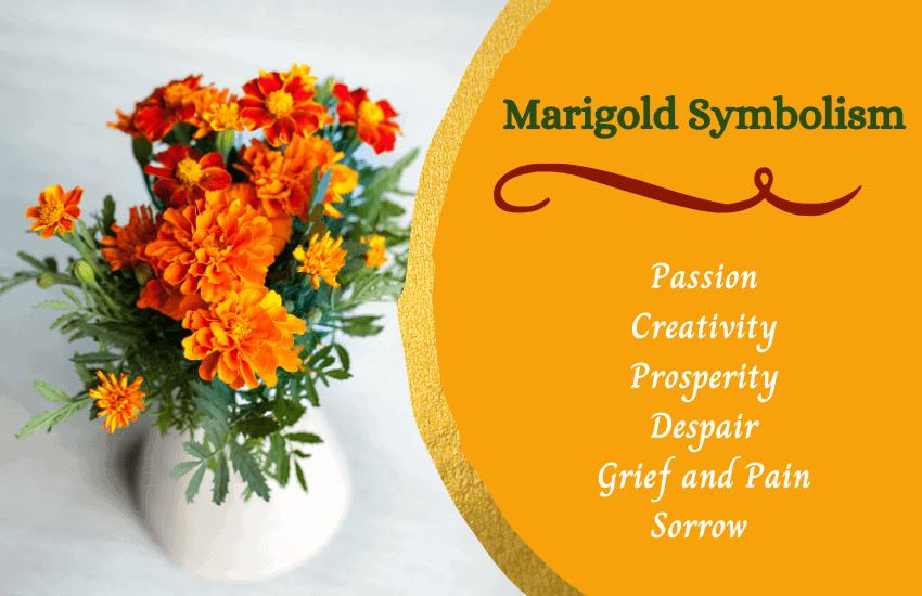 Marigold flower meaning symbolism