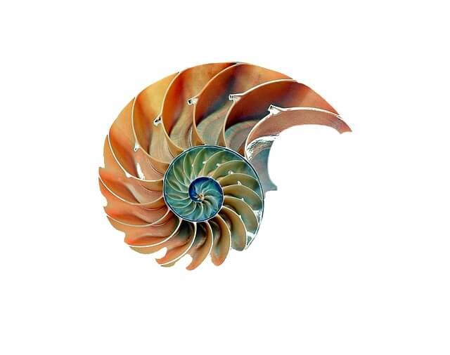 Nautilus shell growth
