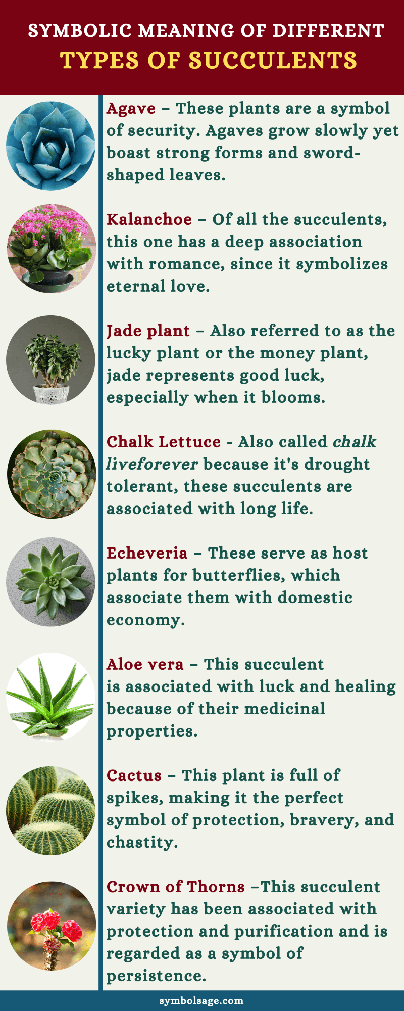 succulent varieties meanings and symbolism
