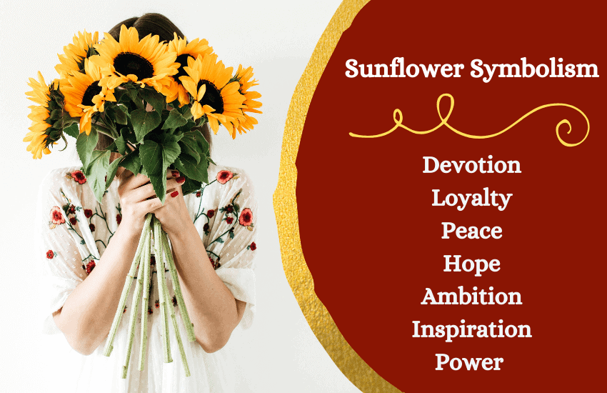 Symbolic meaning of sunflower