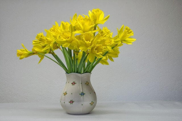 Symbolism of daffodil flower