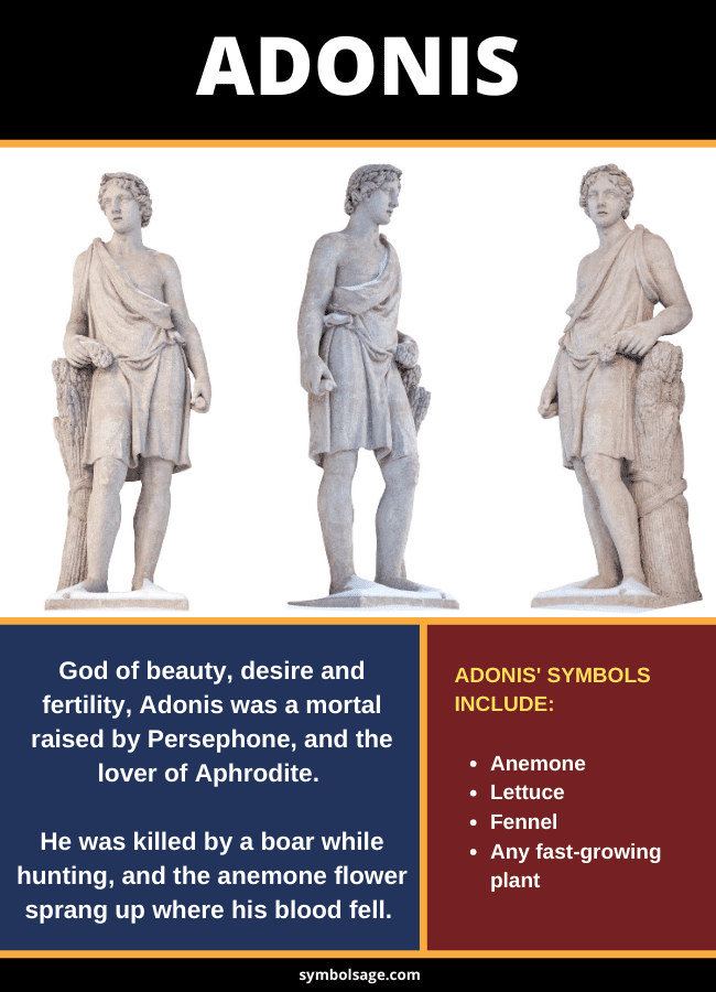 symbols of Adonis God of Beauty and Desire