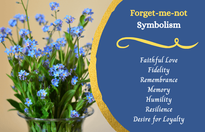 Significance of forget me nots