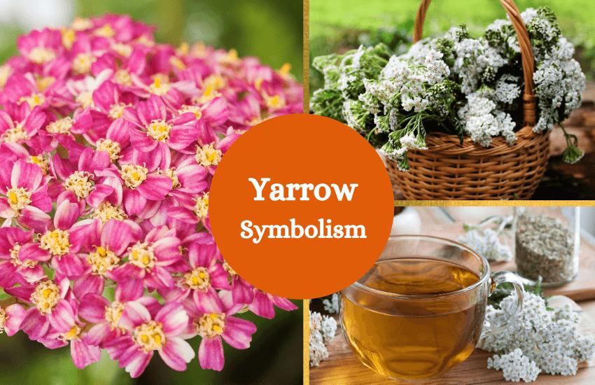 Yarrow symbolism meaning