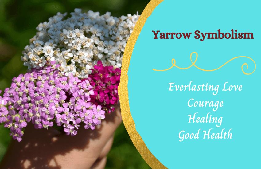 Yarrow symbolism