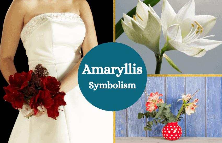 Amaryllis meaning symbolism