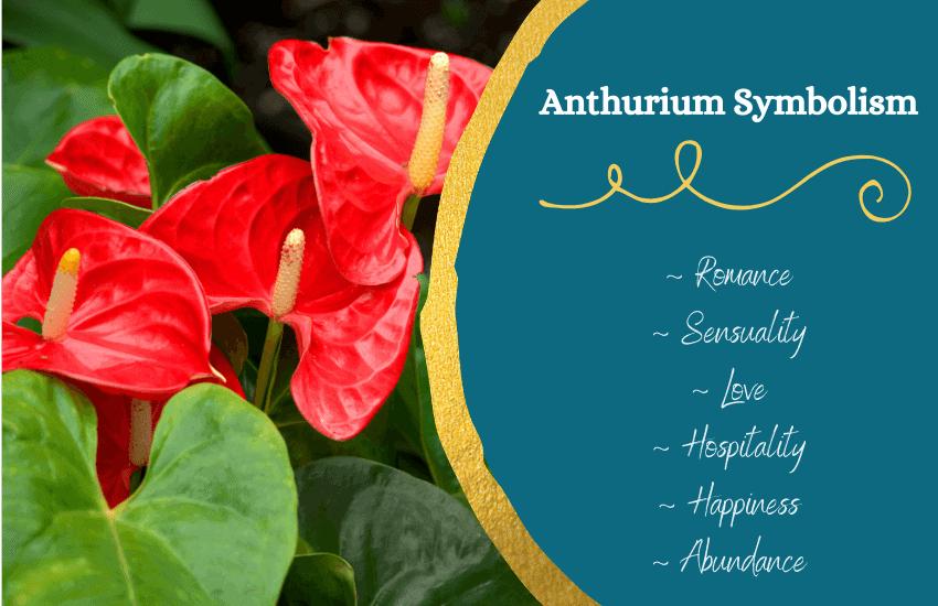 Anthurium flower meaning