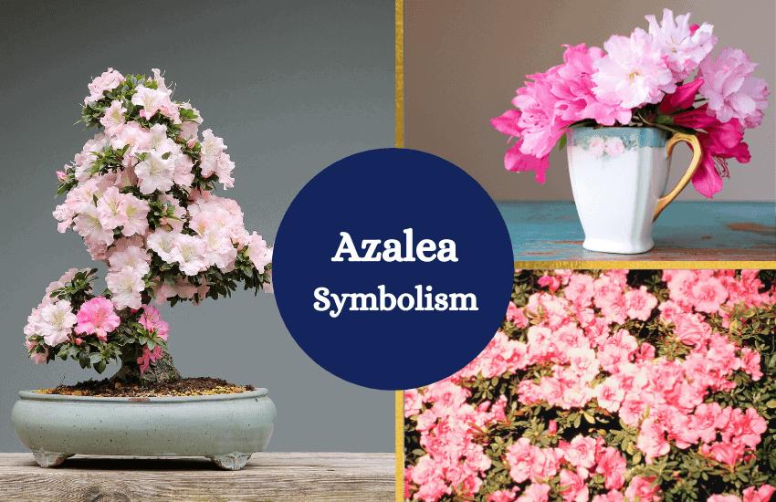 Azalea flower symbolism