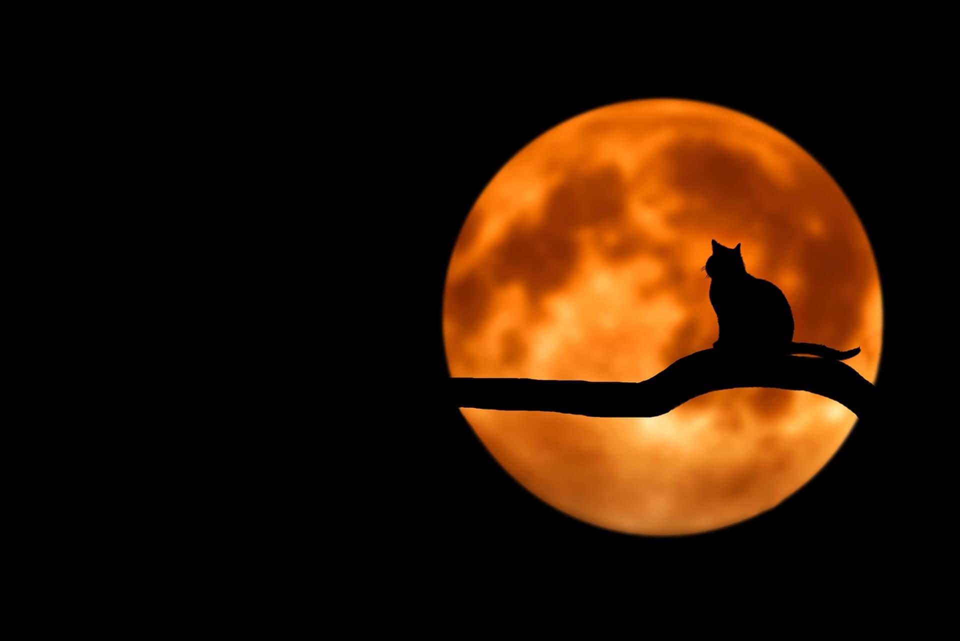 Bakeneko cat symbolism