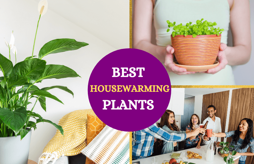 Best housewarming plant gifts