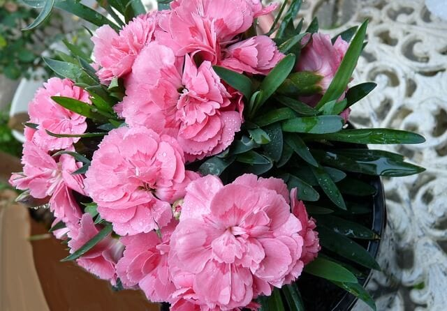 Carnation pot